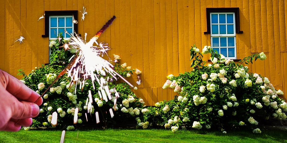 Image of Where to Buy Wedding Sparklers in Connecticut