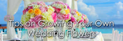 Growing Your Own Wedding Flowers image