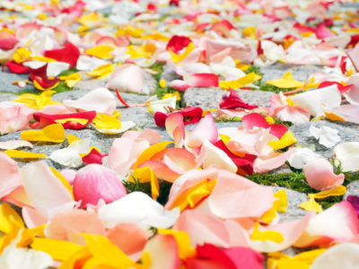 Rose Petals Lining Wedding Aisle image
