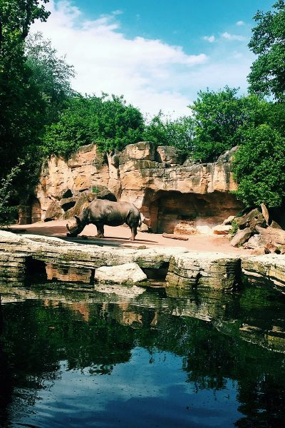 Image of a Wedding Location at the Little Rock Zoo